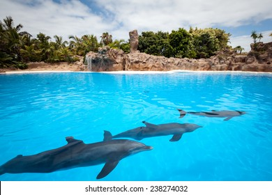 Speech dolphins Canary Islands. Tenerife, Spain.