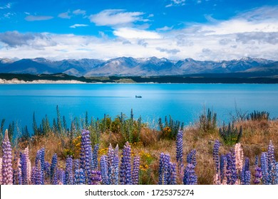A speed boat on Lake Pukaki, a blue glacial alpine lake in Mackenzie Basin in New Zealand's South Island.  Lake Pukaki view with lupine flowers in foreground and snow-capped mountains in background.