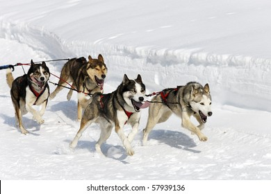 speed dogs