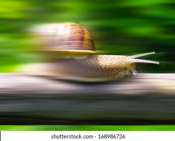 Speed snail - photo manipulation
