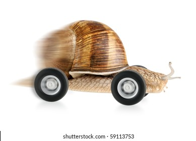 Speedy snail on wheels, with partial motion blur and white background