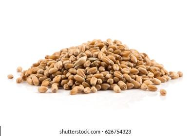 Spelt grain (dinkel wheat) isolated on white background
