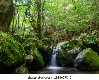 Spend a quiet time in the mossy mountains
