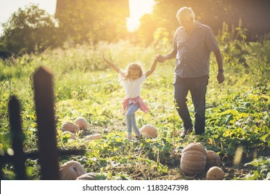 Spending time with granddad is the best. Grandfather and granddaughter in the field with pumpkins. Copy space.