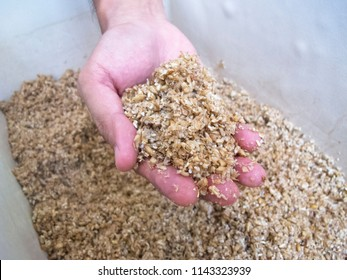 Spent Grain in hand : Homebrewing