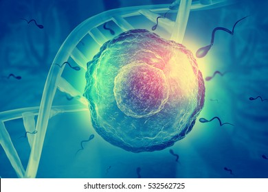 Sperm and egg cell on scientific background. 3d illustration