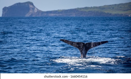 Sperm whale fin with Faial, Acores, in the background