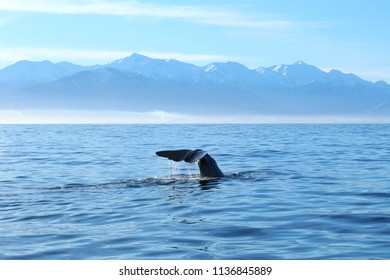 Sperm Whale Tail and Mountains in Kaikoura, New Zealand