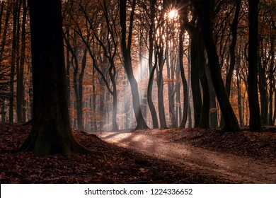 """Speulderbos The """"dancing"""" trees Speulder- and Sprielderbos one of the oldest and most beautiful forests in the Netherlands."""