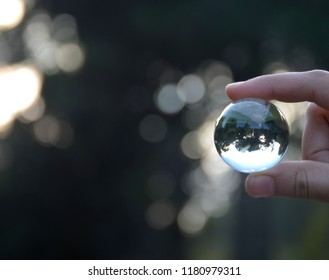 sphere on the forest