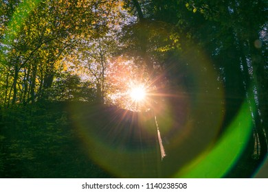 Spheric Lens Flare Chromatic Aberration in Forest at Sunset
