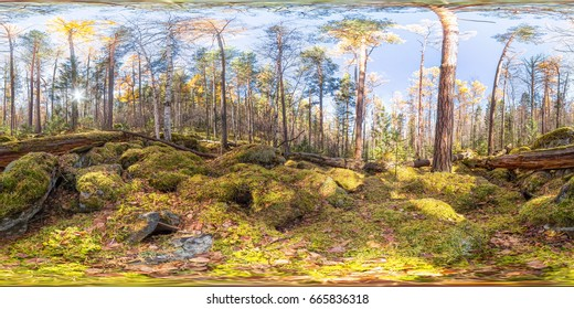Spherical panorama 360 degrees 180 old moss-covered boulders in a coniferous forest