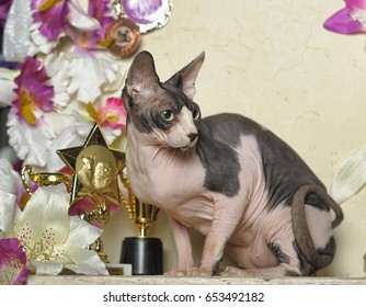 Sphynx cat with lilies and orchids flowers.
