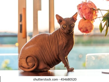 Fat Cat Images Stock Photos Amp Vectors Shutterstock