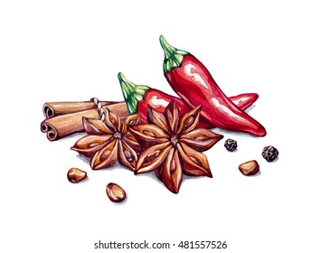 Spice composition. Spice group. Red pepper, star anise, cinnamon, pepprcones, anise seed. Watercolor illustration isolated on white background, clip-art.