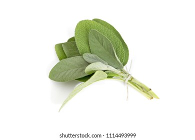 Spice plant: sage leaves (salvia officinalis) in bunch, isolated on white background