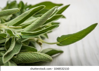 Spice plant sage, salvia officinalis close up isolated over white
