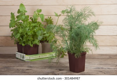 Spicy plants in pots and fennel in the foreground.