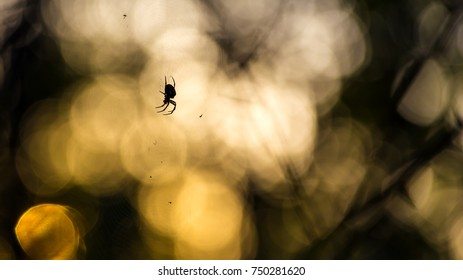 Spider in the Autumn Forest.