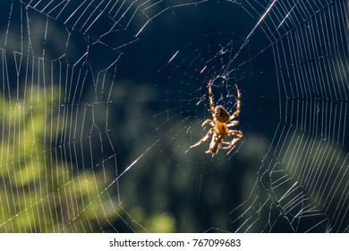 Spider in the centre of a spider's web.  Backilit with selective focus and bokeh.  There is dew on the silk.