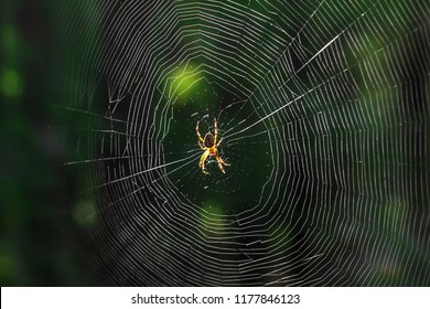 The spider climbs on the web. - Shutterstock ID 1177846123
