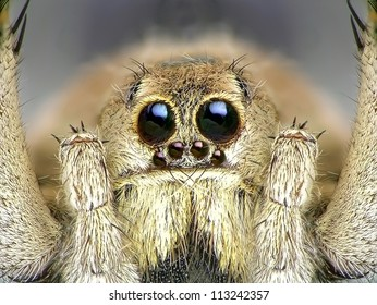 Spider. Close up.