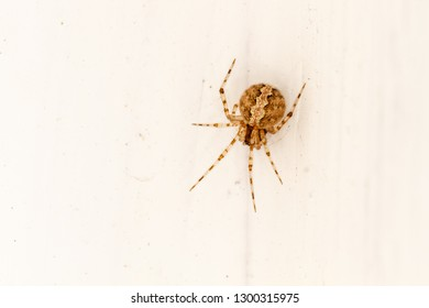 Spider of colorful color and drawing inside a house. Arachnid.