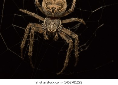 Spider cyborg with metal joints on legs. Dark background a scary spider similar to a robot. Spider Araneus close up. Macro photo of a spider at night hanging on a cobweb head down.