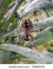 Spider devouring prey in it's web