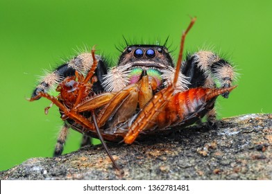 spider is eating cockroach