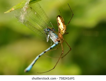 A spider eating a mayfly