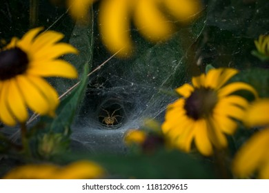 A spider hiding in it's web among a bunch of daisies. Nope nope nope!