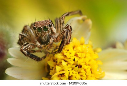 Spider macro photography with flower background