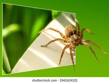 Spider in the mirrow