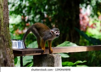 spider monkey dominican republic punta cana