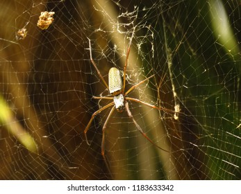spider nature florest