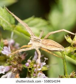 Spider in nature. macro