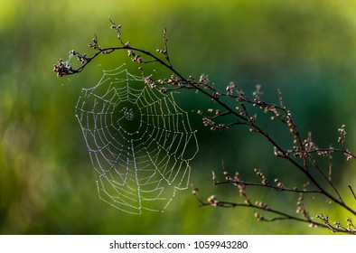 Spider net at the early morning