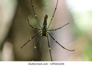 spider with its net in front of the house - Shutterstock ID 1395631244