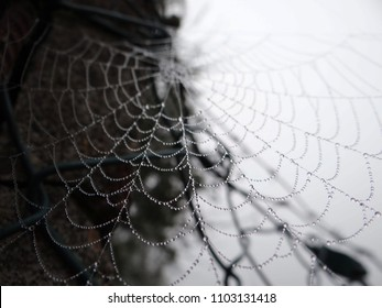 spider net in the morning
