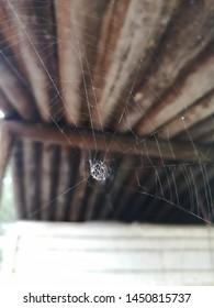 Spider net spidermans netred spider web
