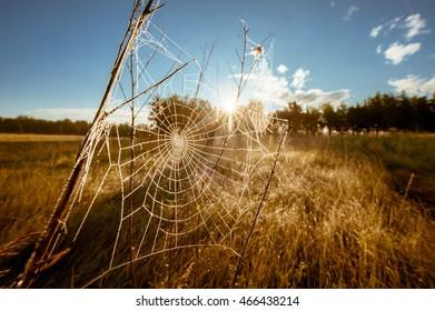 Spider net Spider's web Summer landscape Sunny weather