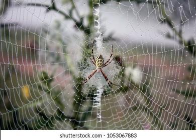 spider on canvas