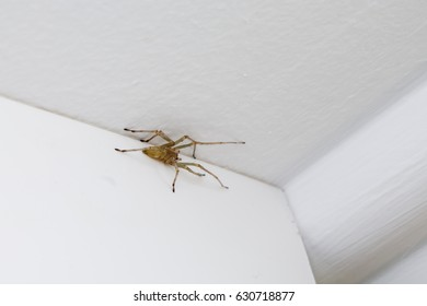 spider on the ceiling