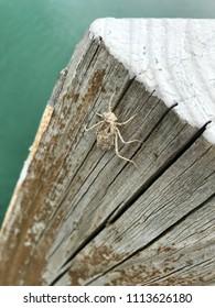 Spider on Dock Pole