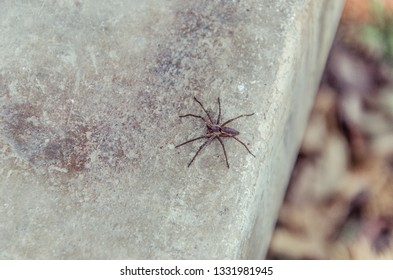 Spider on gray wall