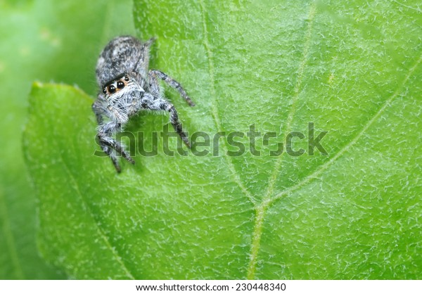 Spider on green