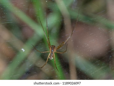 spider on spiderweb in the forest
