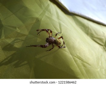 Spider on the tent
