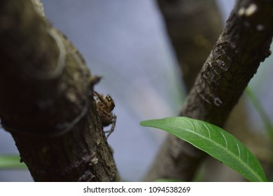 Spider on a tree